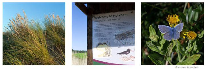 Holkham Nr