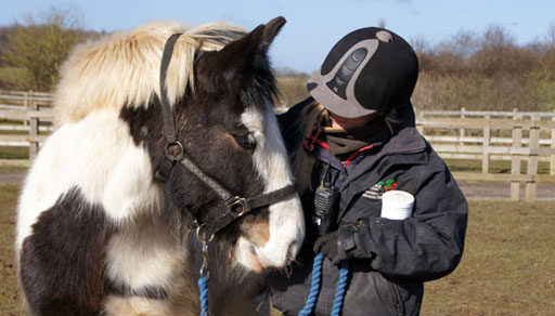 Organisation Image (Redwings Horse Sanctuary: Carer with horse)