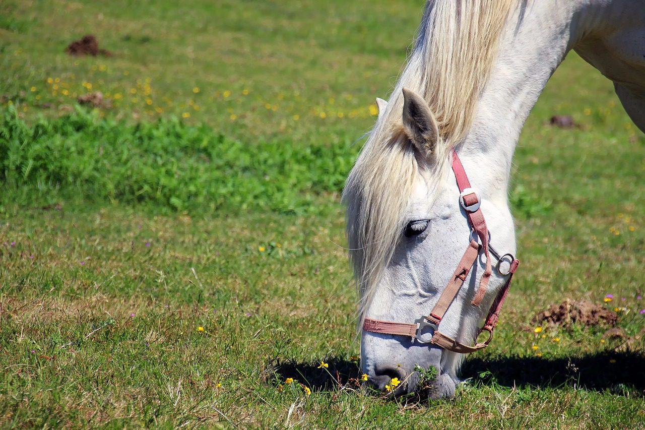 Horse Groom