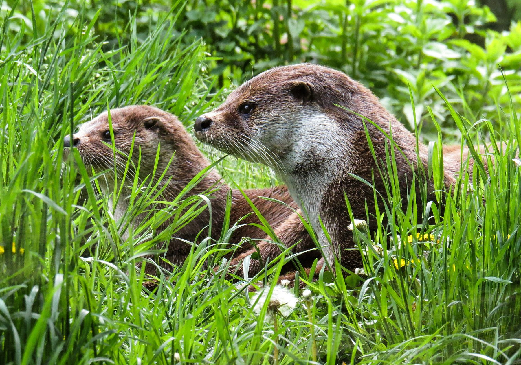 Animal Welfare (Sector Header: Otters)