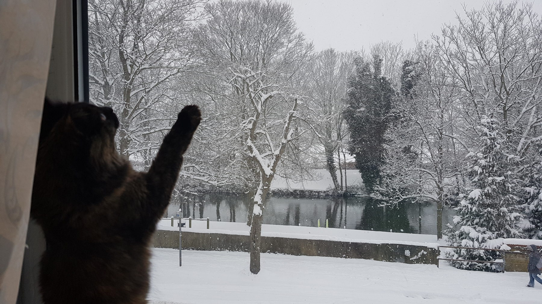 Job Role (Pet Sitter: Kitten looking out of a window)
