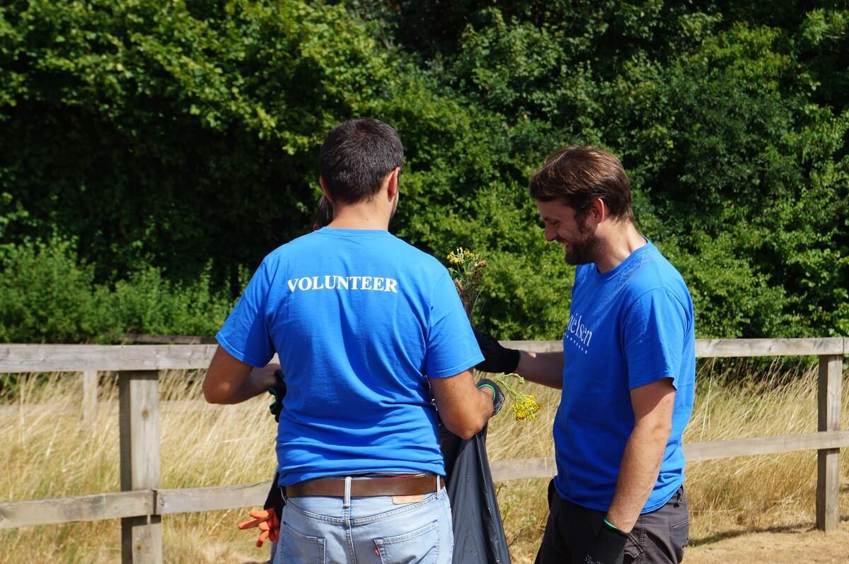 Organisation Image (Redwings Horse Sanctuary: Volunteers working in field)