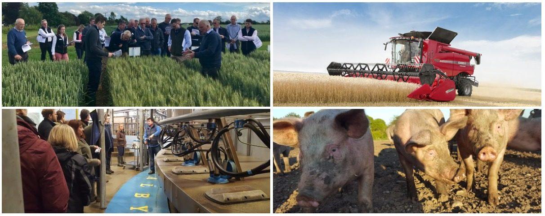 Fram Farmers : Photo Gallery
